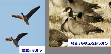 【表】最近10年間の個体数の推移(単位:羽)
